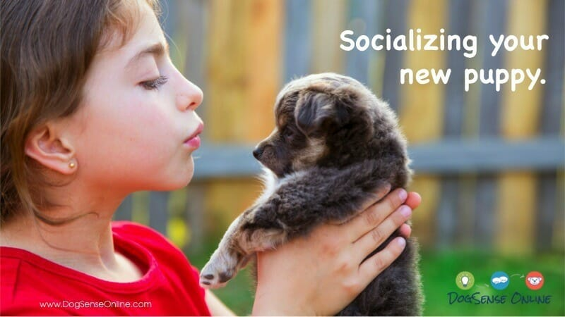 Puppy Socialization in Bloomington, MN