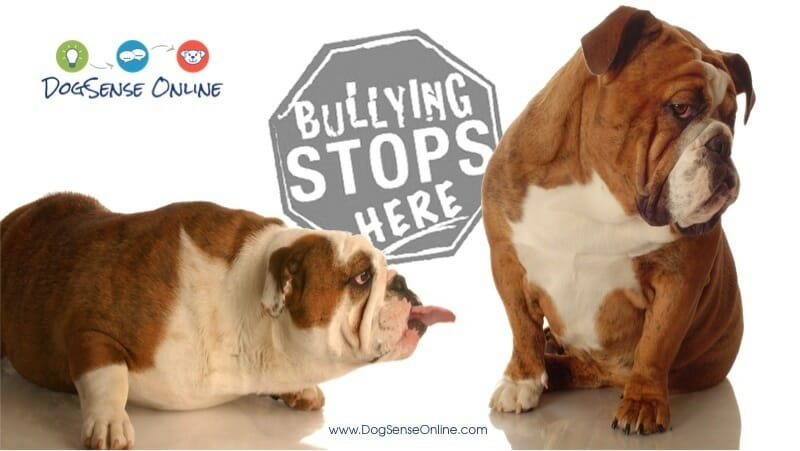 Stop Dog Bullying at Minneapolis Dog Parks