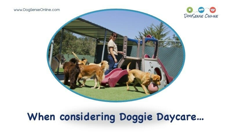 Best Dog Daycare in Minneapolis, MN