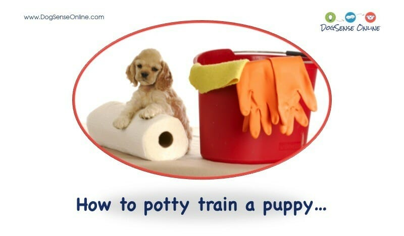 Puppy Potty Training in Minneapolis, MN