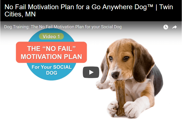 Motivating your dog in Twin Cities, MN