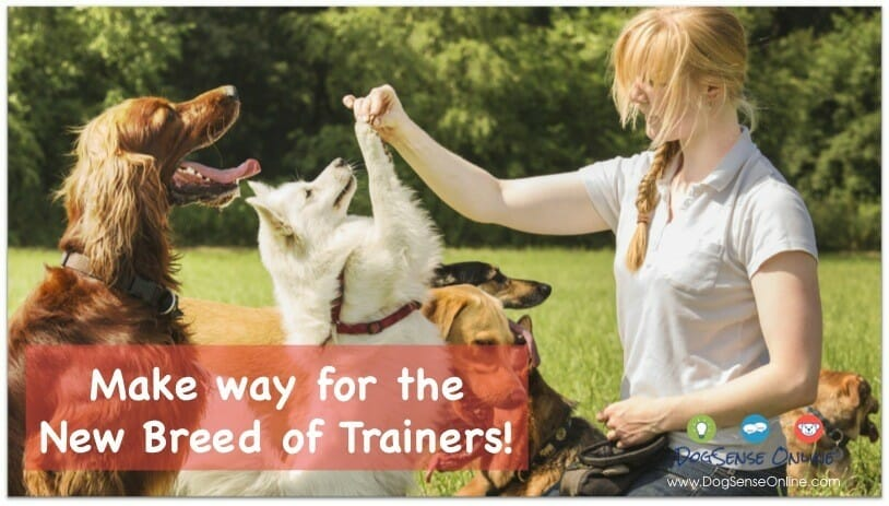 Modern Dog Trainers
