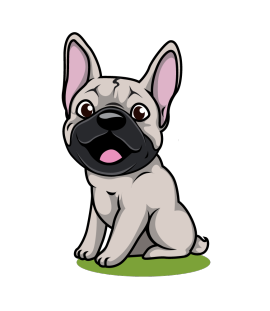 French Bulldog MN