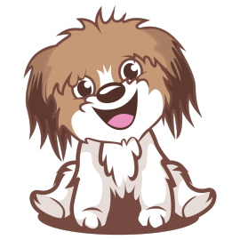 Havanese Dog Minneapolis