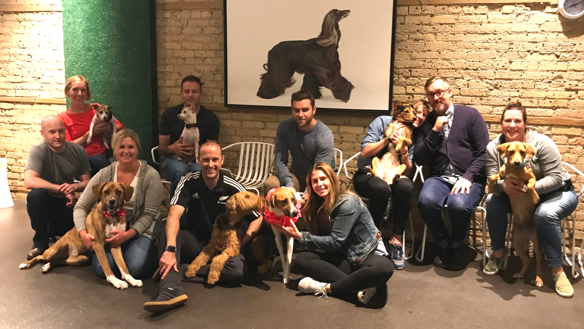 Level 2 Dog Training Minneapolis
